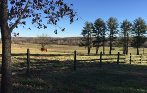 House sits on high point of 26 acres - always a breeze and overlooks pastures from every direction