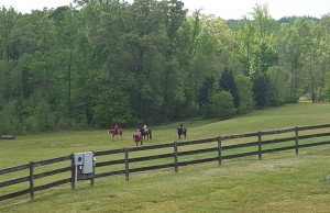 Cross Country Ride at FENCE
