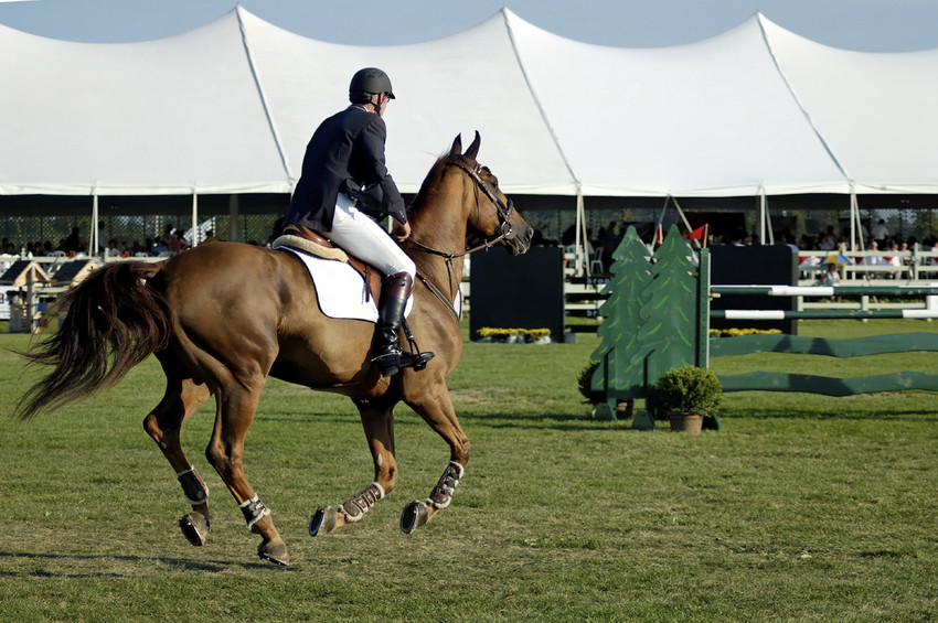 Horse Show jumping competition